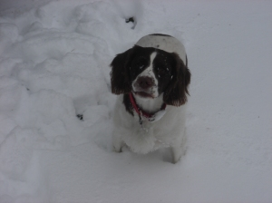 covered in snow