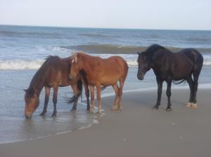 beach-039
