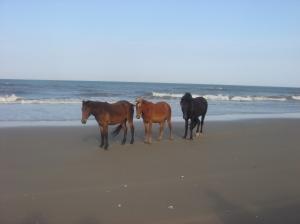 beach-050